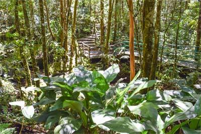 Botanischer Garten im Kinabalu Nationalpark