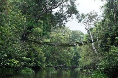 Brücke über den Kinabatangan River