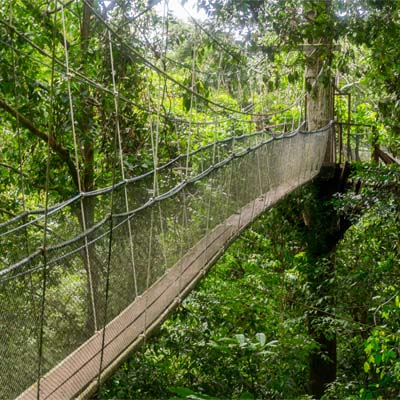 Canopy Skywalk im Mulu Nationalpark
