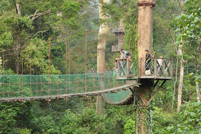 Danum Valley Conservation Area Canopy Skywalk
