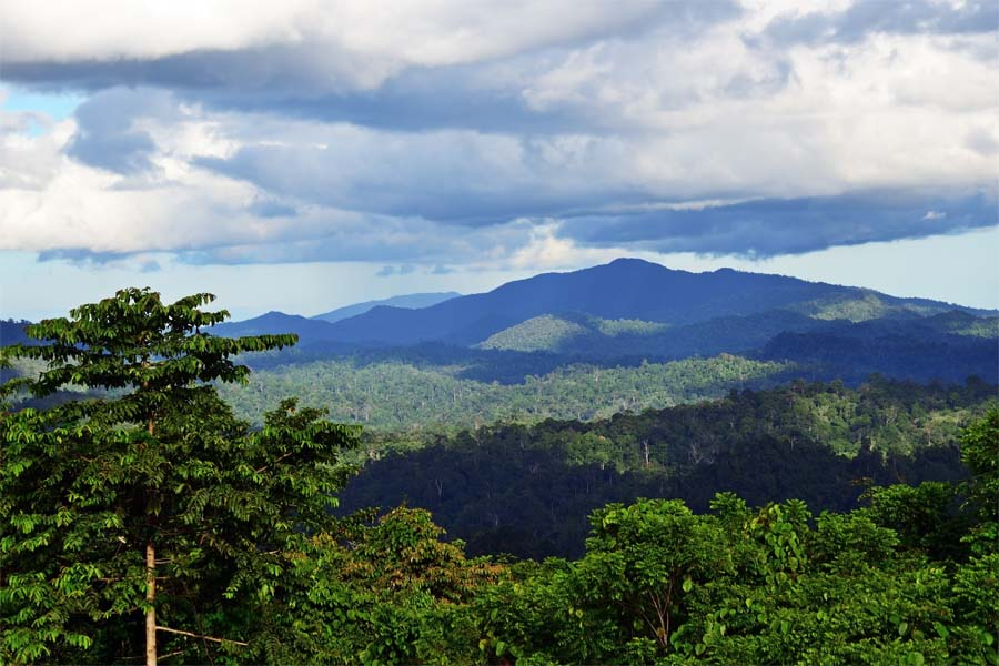 Danum Valley Conservation Area