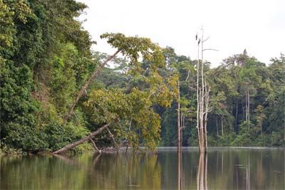 Kinabatangan Ox Bow Lake