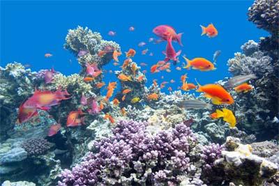 Korallen in Lankayan Island
