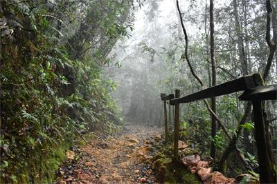Trail am Mount Kinabalu im Nationalpark