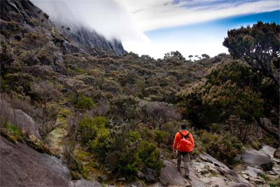 Blick im Kinabalu Nationalpark