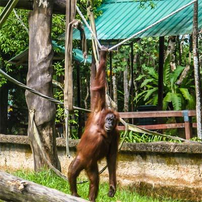 Outdoor Nursery im Sepilok Orangutan Rehabilitation Centre