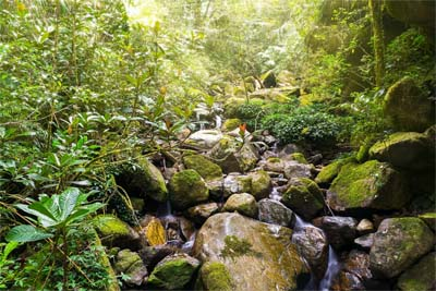 Bauchlauf im Kinabalu Nationalpark