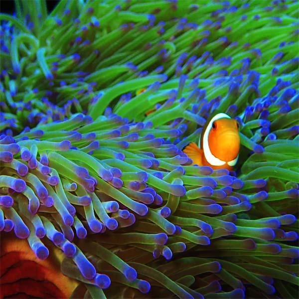 Tauchen Malaysia hat eine vielfältige Unterwasserwelt