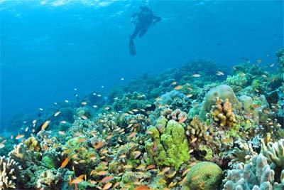 Tauchen am Sapi Reef - Tunku Abdul Rahman Marine Park