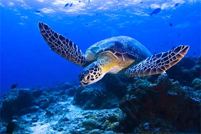 Schildkröte im TARP