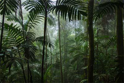 Borneo-Reise - Ursprünglicher Regenwald zu Fuß