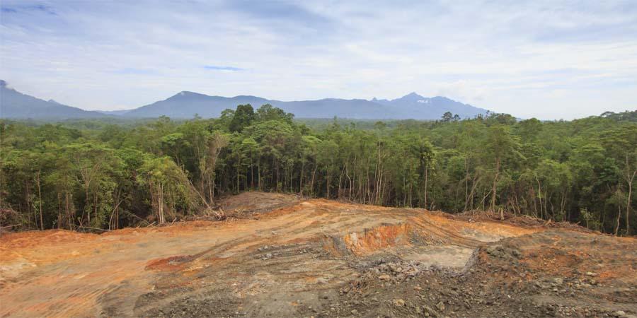 Zerstoerung des Regenwaldes ist eine Bedrohung für Orang-Utans