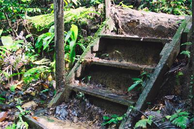 Trail im Kubah Park