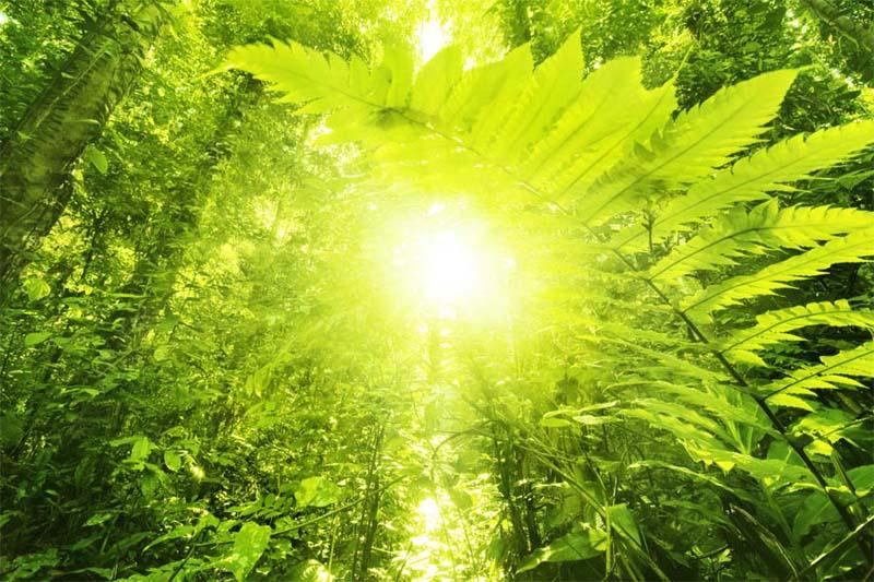 Borneo Reisezeit - Sonnenstrahlen im Dschungel