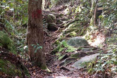 Jalan Lintang Trail im Bako National Park