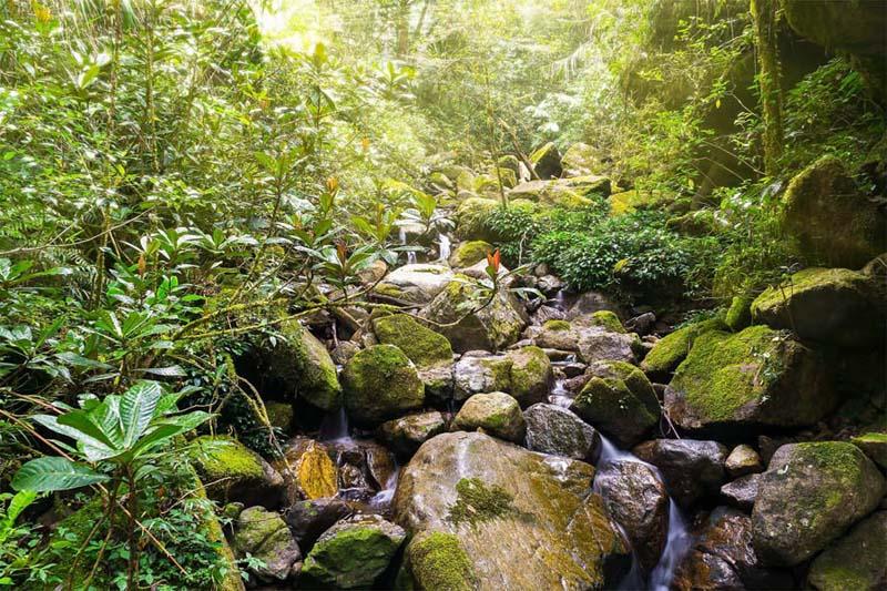 Bachlauf im Kinabalu NP