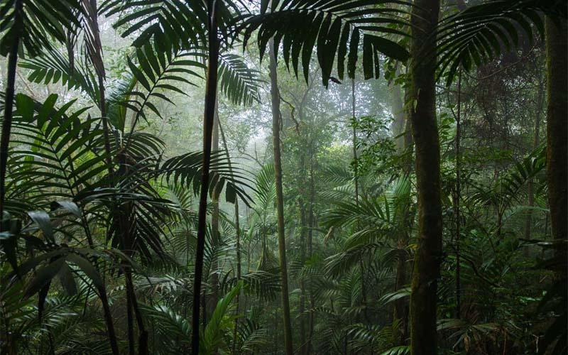 Ursprünglicher Regenwald