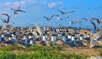 Bird Island Sanctuary Layang Layang