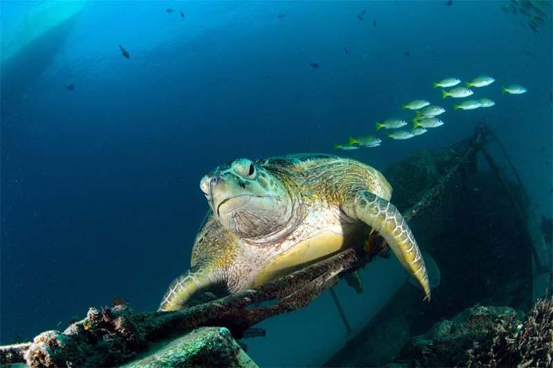 Schildkröten gibt es viele bei Mabul