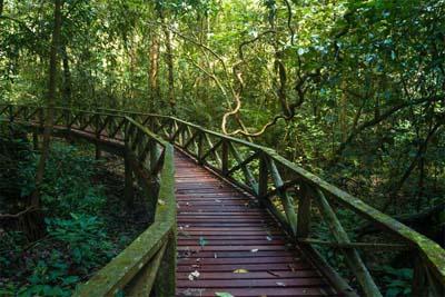 Regenwald bei Miri