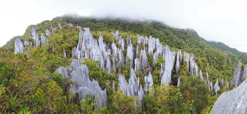 Mulu Nationalpark Blick auf die Pinnacles