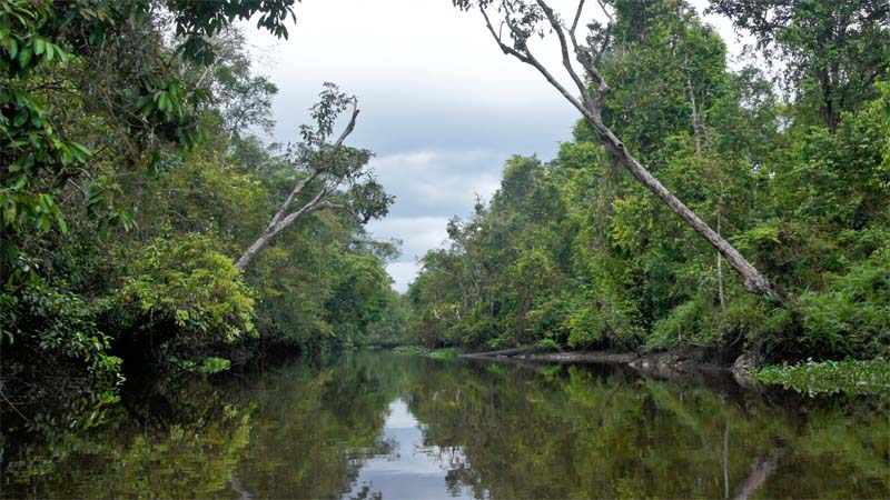 Flusssafari auf dem Kinabatangan River