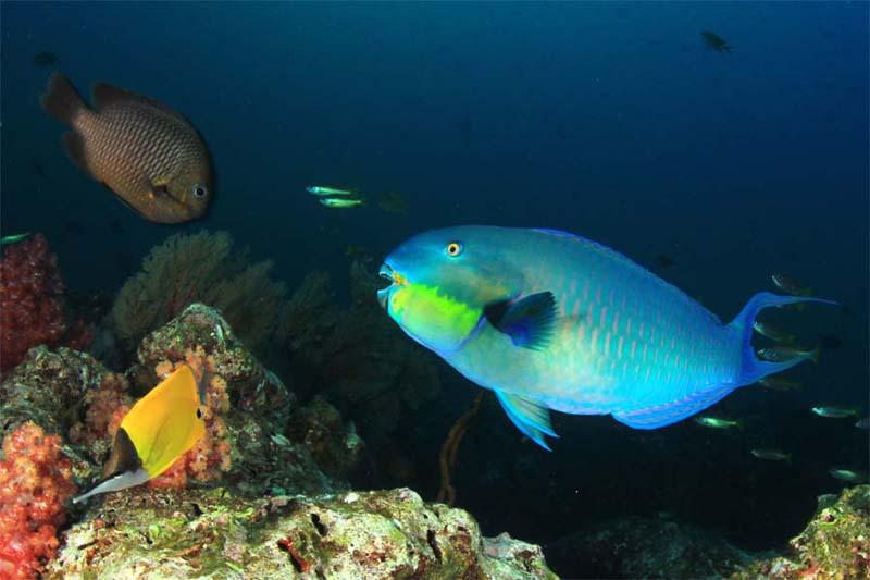 Bunte Unterwasserwelt im TARP